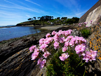 Sandycove, Kinsale, at low tide, early summer 2014.